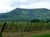 140510-1eres-vignes-dalsace