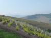 130601-9-fleurie-eglise-de-la-madone-3